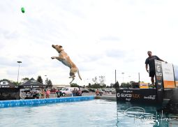 July 22, 2018: Dock Dogs competition at Scheels Hunting Expo in Grand Forks, ND. Photo by Russell Hons TO VIEW ALL PHOTOS VISIT: https://russellhonsphotography.shootproof.com/2018_DockDogs